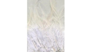"""Plunksnos """"Feathers Pure White"""", 15vnt."""