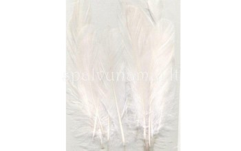 "Plunksnos ""Feathers Pure White"", 15vnt."