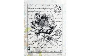 "Akriliniai antspaudukai ""Old Letter Rose nr.1"""