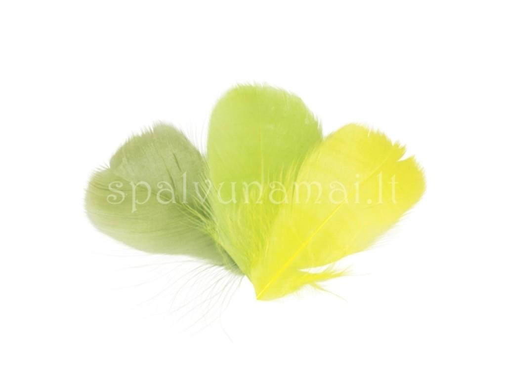 "Dažytos plunksnos ""Feathers Green-Yellow"", 48vnt."